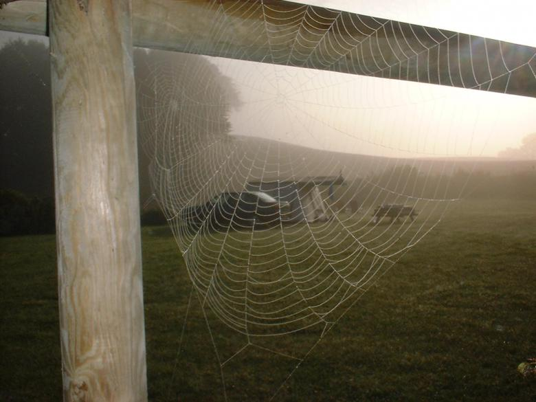 Free Stock Photo of Spiderweb on a cold morning Created by eduard frankes