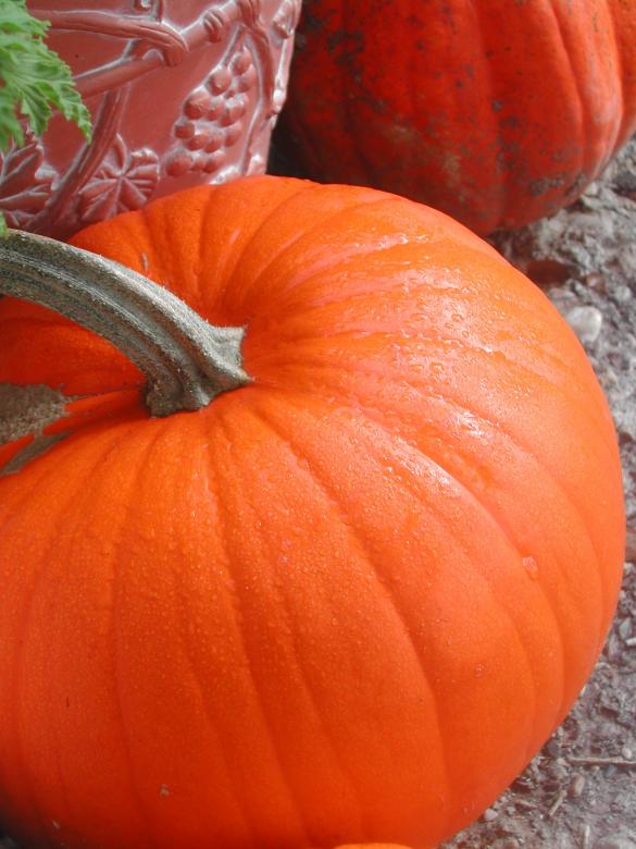 Free Stock Photo of Pumpkin Created by laurie