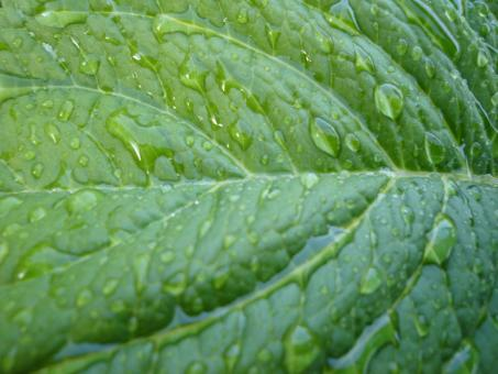 Water drop on leaf - Free Stock Photo