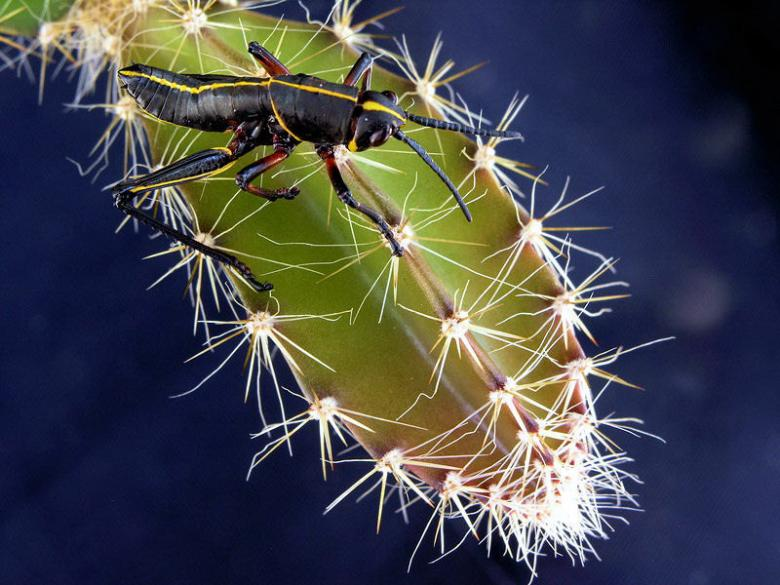 Free Stock Photo of a prickly situation Created by Joe Saladino