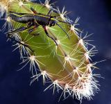 Free Photo - a prickly situation