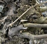 Free Photo - Dead tree roots