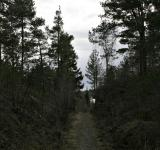 Free Photo - Forest path
