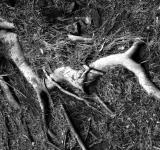 Free Photo - Roots of life