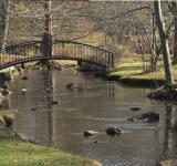 Free Photo - Bridge over shallow creek