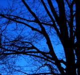 Free Photo - bare trees  night