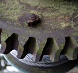 Free Photo - Rusted gear and wires