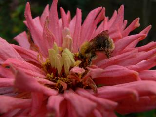 Download bee Free Photo