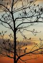Free Photo - budding tree at sunset