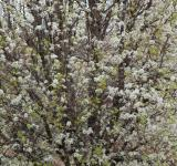 Free Photo - blooming tree