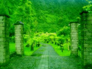 Download Green path Free Photo