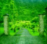 Free Photo - Green path