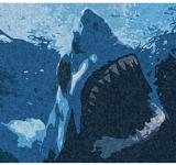 Free Photo - blue shark sketch