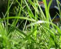 Free Photo - Backyard grass