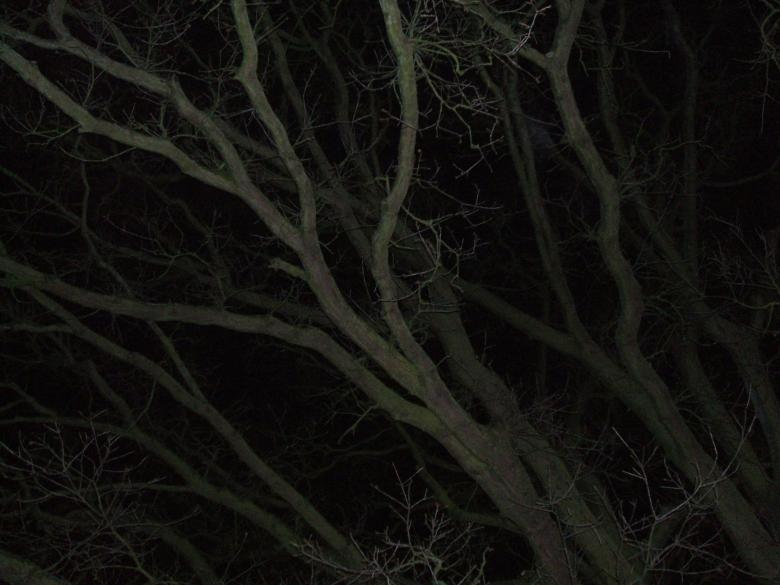 Free Stock Photo of tree branches at night Created by david chapman
