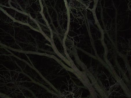 tree branches at night - Free Stock Photo