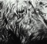 Free Photo - Shaggy dog