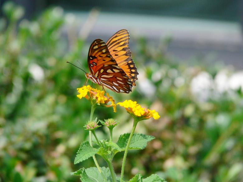 Free Stock Photo of Butterfly in late summer Created by Dennis Smith