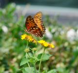 Free Photo - Butterfly in late summer