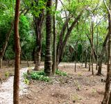 Free Photo - Jungle trees