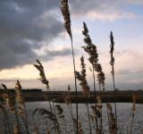 Free Photo - Tall grasses at sunset