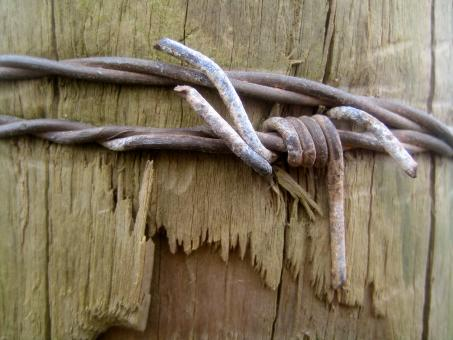 Barbed wood - Free Stock Photo