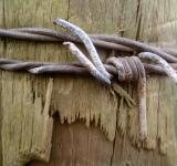 Free Photo - Barbed wood
