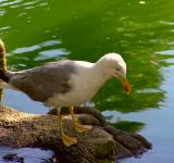 Free Photo - Seagull standing
