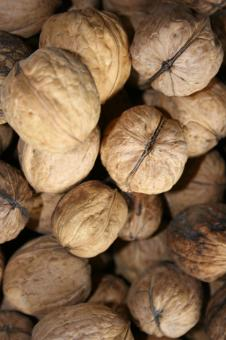 Pile of walnuts - Free Stock Photo
