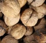 Free Photo - Pile of walnuts