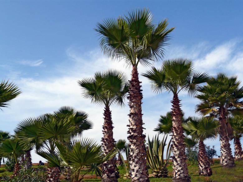 Free stock image of Palm trees created by RositaSo Image