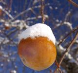 Free Photo - Frozen apple