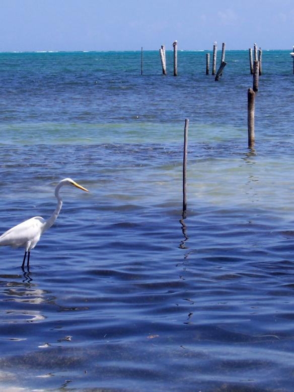 Free Stock Photo of Crane fishing Created by Glenn Gallimore
