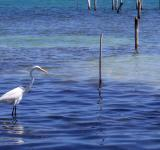 Free Photo - Crane fishing