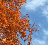 October leaves - Free Stock Photo