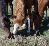 Young horses smell the cat - Free Stock Photo