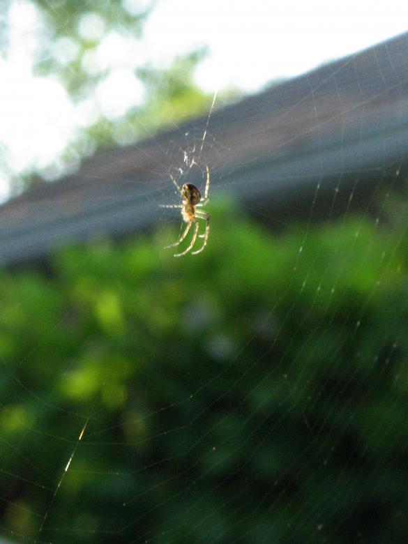 Free Stock Photo of Spider Created by Lori Christensen