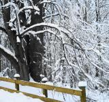 Free Photo - Snow covered
