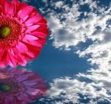Free Photo - Flower reflection