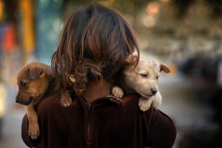 Free Stock Photo of Girl with puppies Created by Prakash Hatvalne