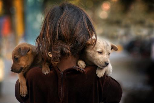 Girl with puppies - Free Stock Photo