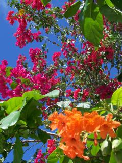 Download Tropical flowers Free Photo