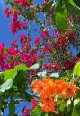 Free Photo - Tropical flowers