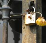 Free Photo - Lockflower