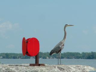 Download Heron Free Photo