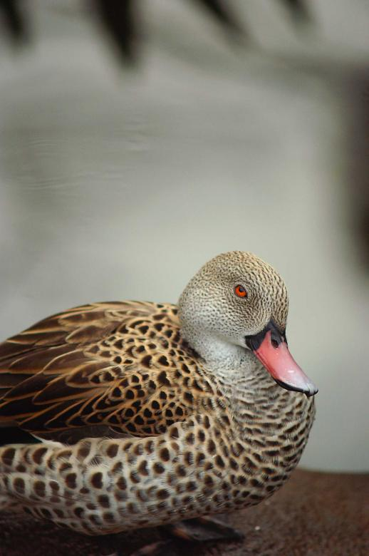 Free Stock Photo of Sitting duck Created by to0w1r3d