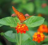 Free Photo - Orange butterfly and flowers