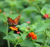 Free Photo - Orange butterfly