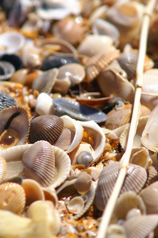 Free Stock Photo of Sea shells Created by to0w1r3d