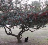 Free Photo - Black cat under tree